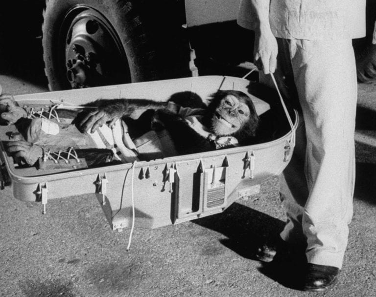The Tragic Tale of Ham The Chimp