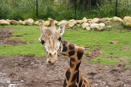 8 Extreme Animal Abnormalities